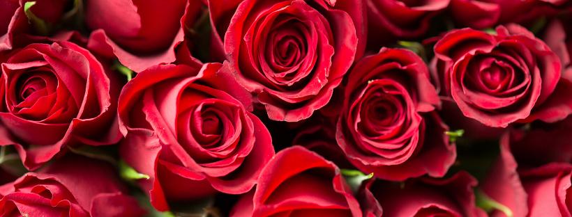 Rose et Reines